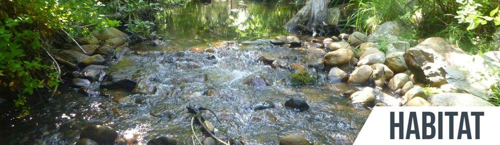 habitat naturale della trota